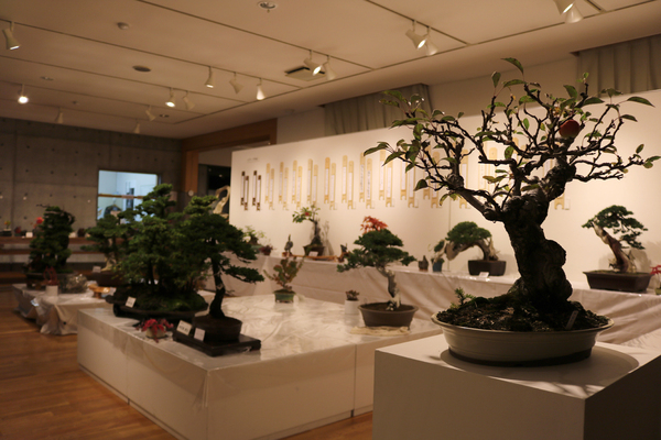 東川町文化ギャラリー展示のお知らせ _b0187229_12513752.jpg