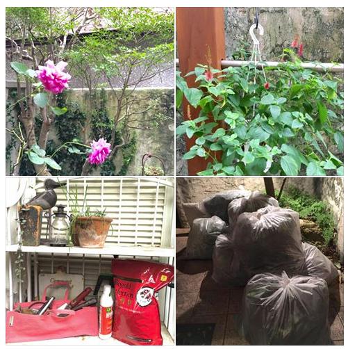 10月 秋の庭仕事 剪定とバイオゴールド肥料_e0044855_18172765.png