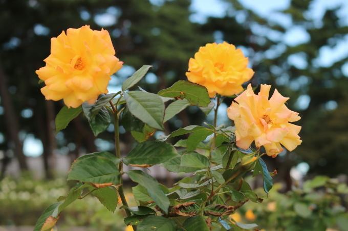f0345263_20111007.jpg
