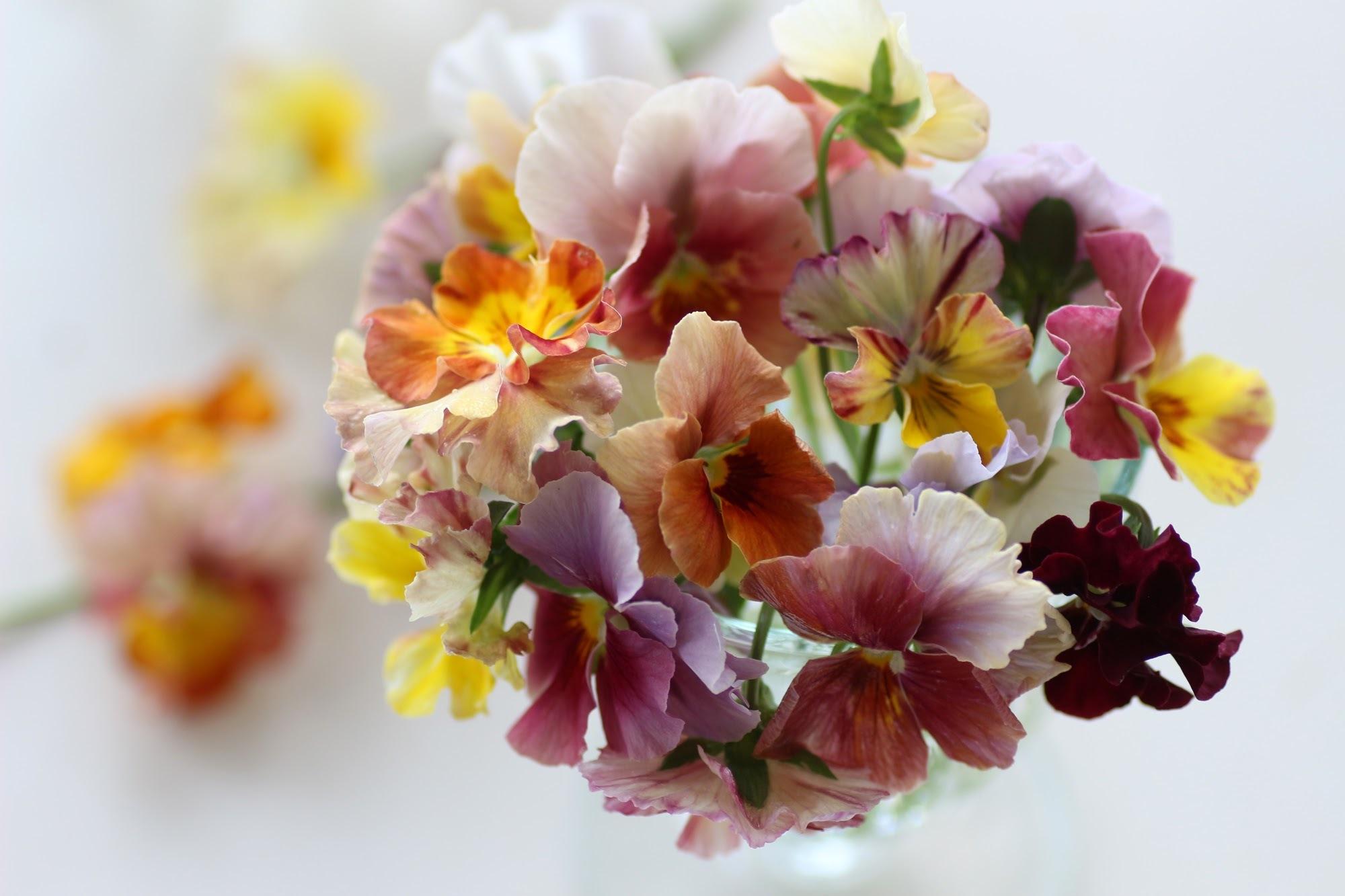 花が選んだ人・・・・_b0137969_05340833.jpeg