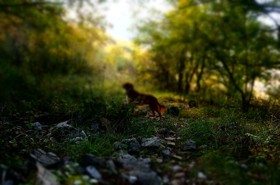 秋が深まるトスカーナ_f0106597_00554957.jpg