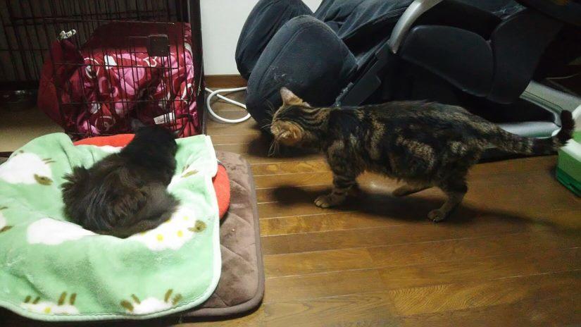 【移動先募集】センター(支所)収容猫(10/21訪問)_f0242002_21453019.jpg