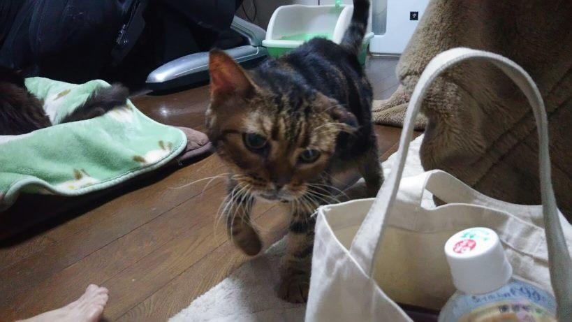 【移動先募集】センター(支所)収容猫(10/21訪問)_f0242002_21453805.jpg