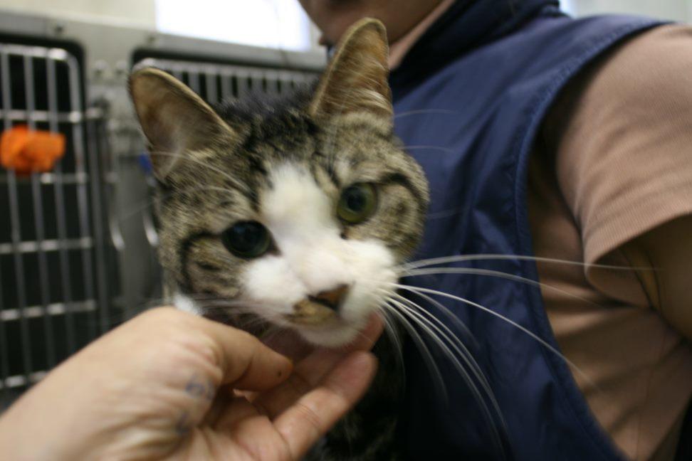 【移動先募集】センター(支所)収容猫(10/21訪問)_f0242002_21555294.jpg