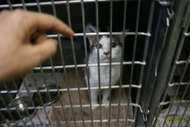 【移動先募集】センター(支所)収容猫(10/21訪問)_f0242002_21583783.jpg