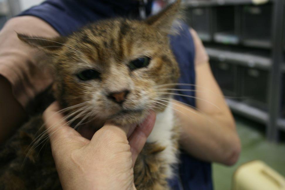 【移動先募集】センター(支所)収容猫(10/21訪問)_f0242002_22160331.jpg