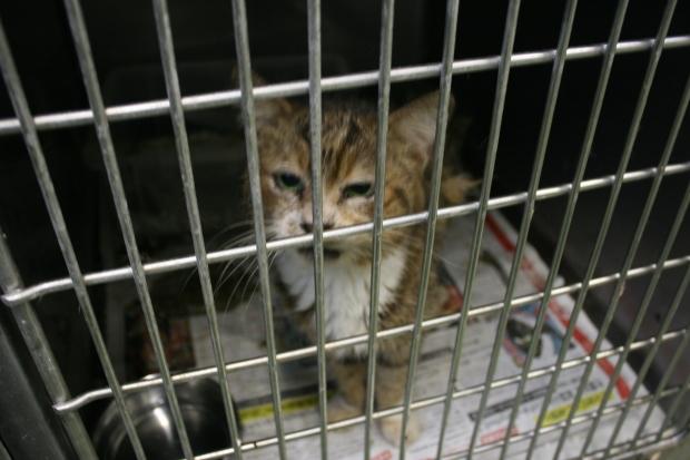 【移動先募集】センター(支所)収容猫(10/21訪問)_f0242002_22161378.jpg