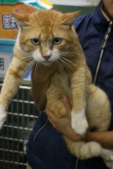 【移動先募集】センター(支所)収容猫(10/21訪問)_f0242002_22163908.jpg