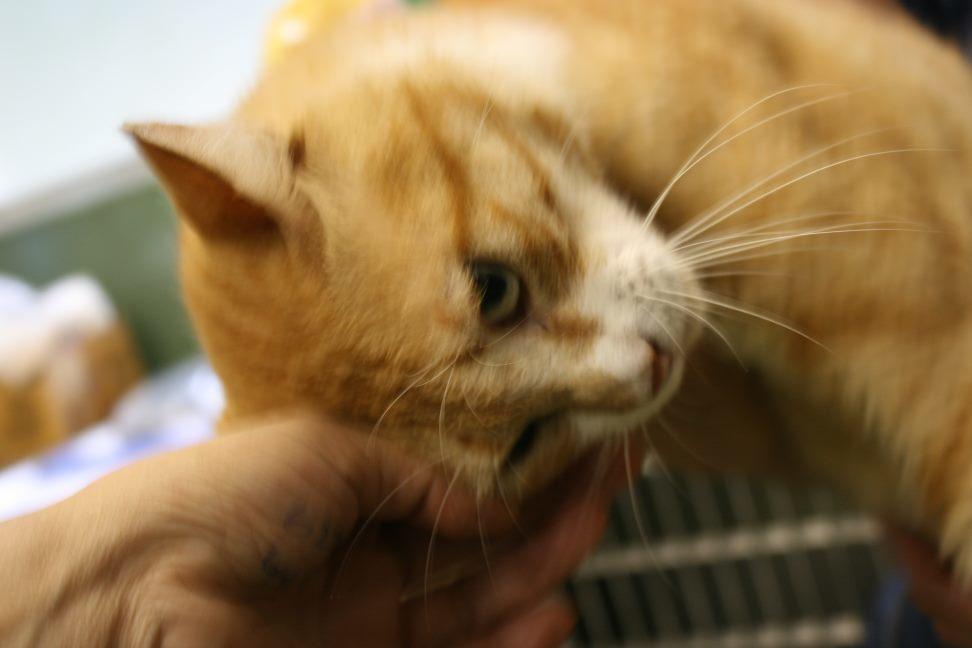 【移動先募集】センター(支所)収容猫(10/21訪問)_f0242002_22165024.jpg