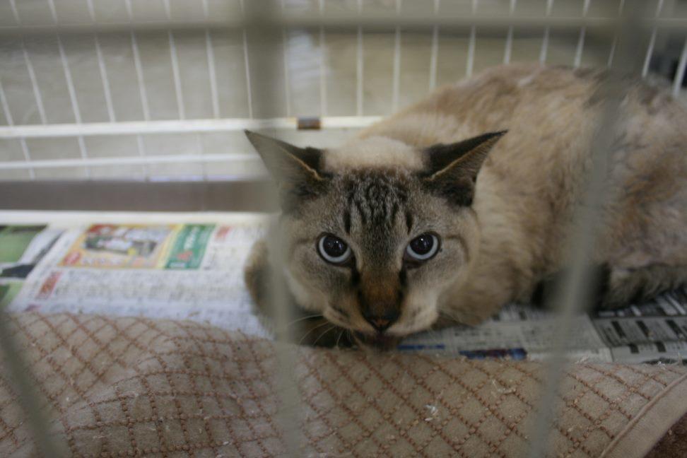【移動先募集】センター(支所)収容猫(10/21訪問)_f0242002_22262931.jpg