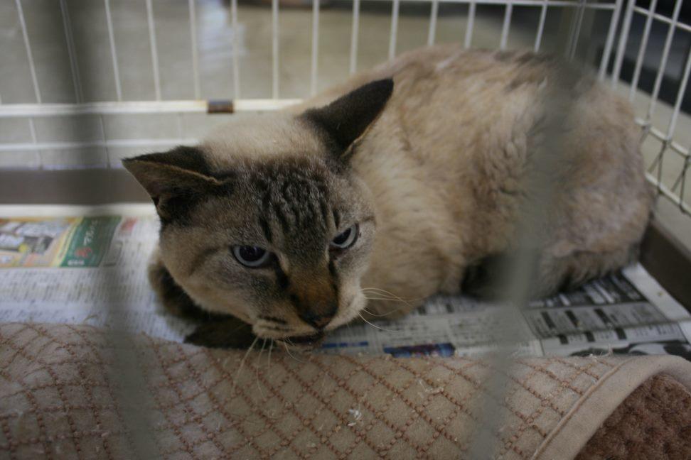 【移動先募集】センター(支所)収容猫(10/21訪問)_f0242002_22263518.jpg