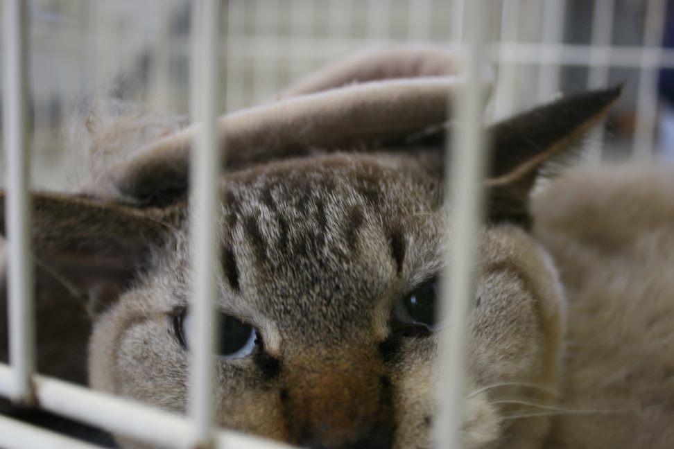 【移動先募集】センター(支所)収容猫(10/21訪問)_f0242002_22264436.jpg