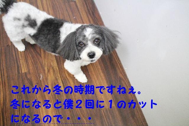 薬用!!_b0130018_22222227.jpg