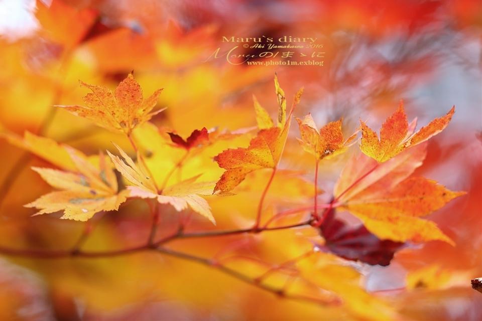まゝに/10月の散策/再ゝ訪Retry/上信越 志賀高原 高山温泉_d0342426_00205787.jpg