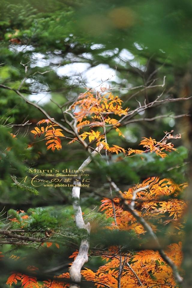 まゝに/10月の散策/再ゝ訪Retry/上信越 志賀高原 高山温泉_d0342426_00454710.jpg