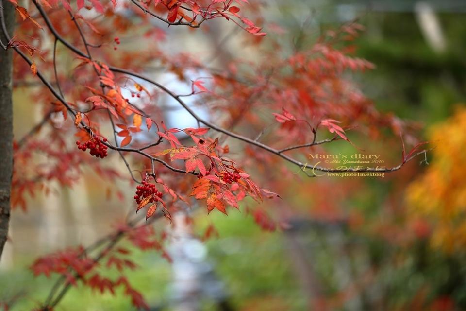まゝに/10月の散策/再ゝ訪Retry/上信越 志賀高原 高山温泉_d0342426_00483524.jpg