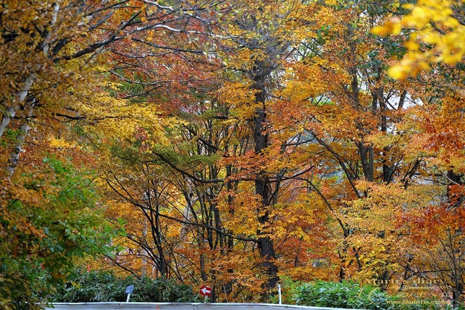 まゝに/10月の散策/再ゝ訪Retry/上信越 志賀高原 高山温泉_d0342426_00485497.jpg