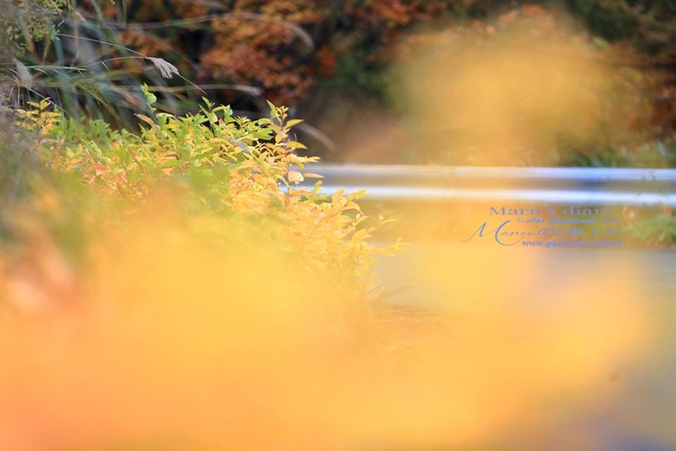 まゝに/10月の散策/再ゝ訪Retry/上信越 志賀高原 高山温泉_d0342426_00492236.jpg