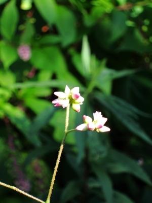 花を探して 施肥終了_d0336530_21175127.jpg