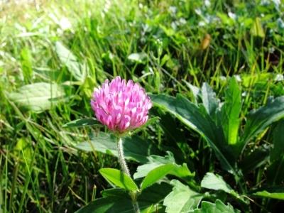 花を探して 施肥終了_d0336530_21175590.jpg