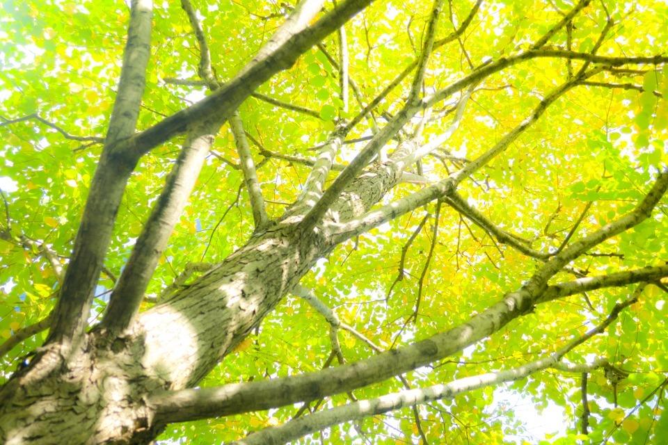 Tree  ・・・秋色へ・・・_f0333031_05183978.jpg