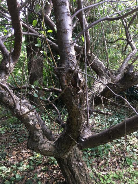 樹々の精に抱かれて_d0337937_17500560.jpg
