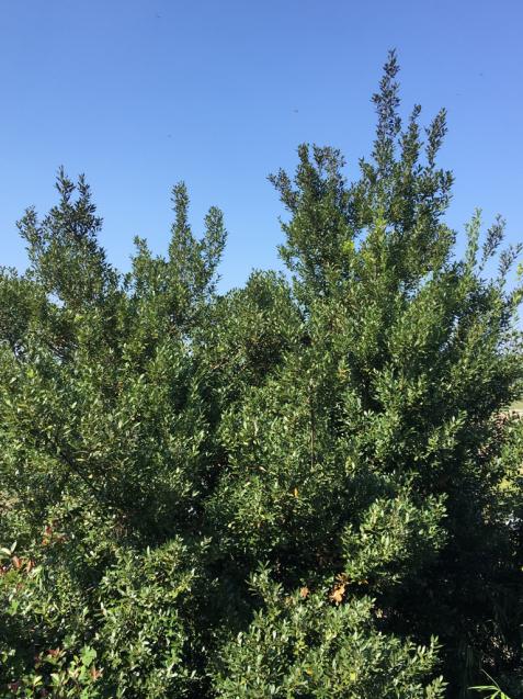 樹々の精に抱かれて_d0337937_17500678.jpg