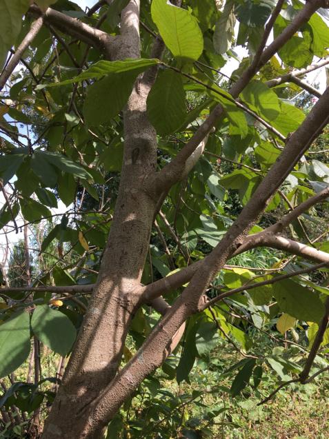 樹々の精に抱かれて_d0337937_17501003.jpg
