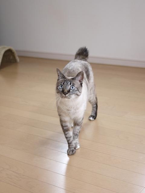 猫のお留守番 ルノーちゃん編。_a0143140_20572233.jpg