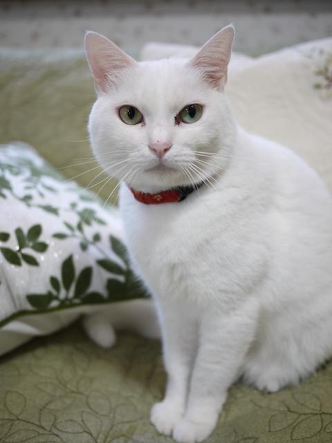 猫のお留守番 ゆきちゃん編。_a0143140_2104022.jpg