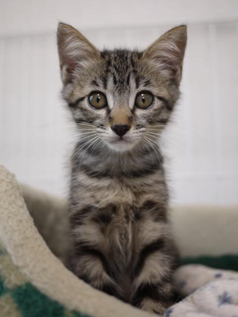 猫のお留守番 しぐれくん編。_a0143140_21133677.jpg