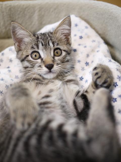 猫のお留守番 しぐれくん編。_a0143140_21142773.jpg