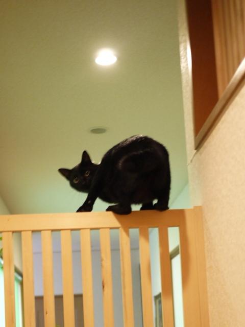 猫のお留守番 風太くん編。_a0143140_21215662.jpg
