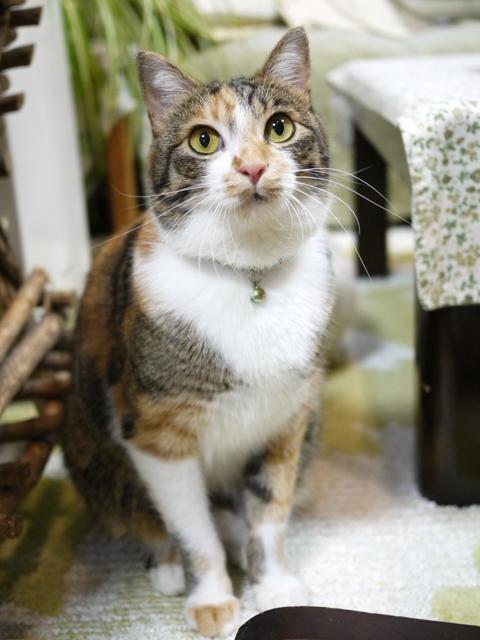 猫のお留守番 ゆめくん編。_a0143140_2155444.jpg