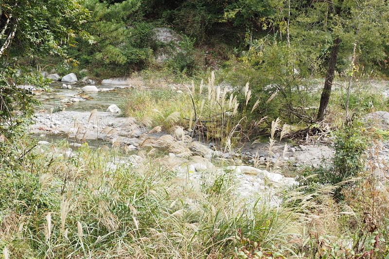 【キャンプ場施設レポート】Foresters Village Kobitto(フォレスターズビレッジ・コビット 南アルプス)②_b0008655_12271036.jpg