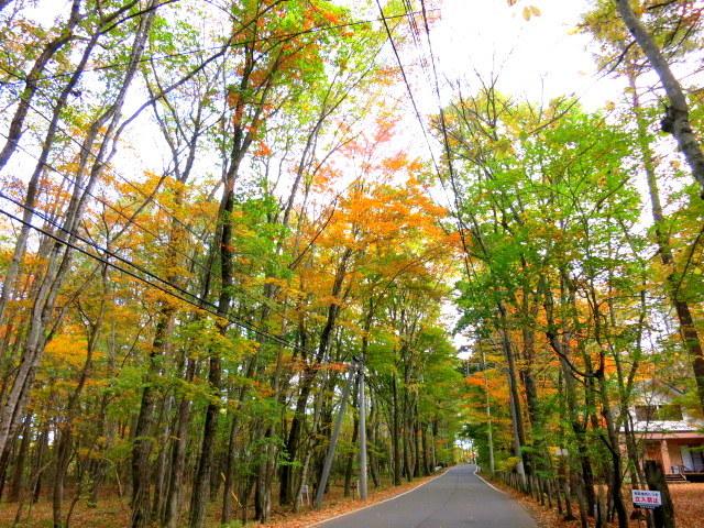 秋の深まる北軽でランチ★KAFE_f0236260_02445538.jpg
