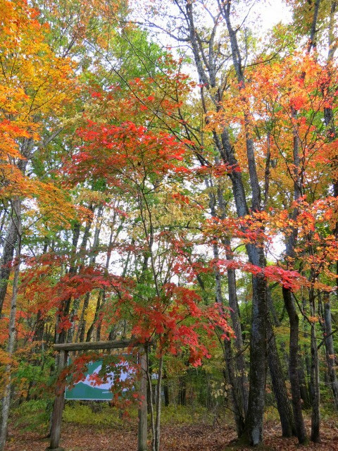 秋の深まる北軽でランチ★KAFE_f0236260_02453808.jpg