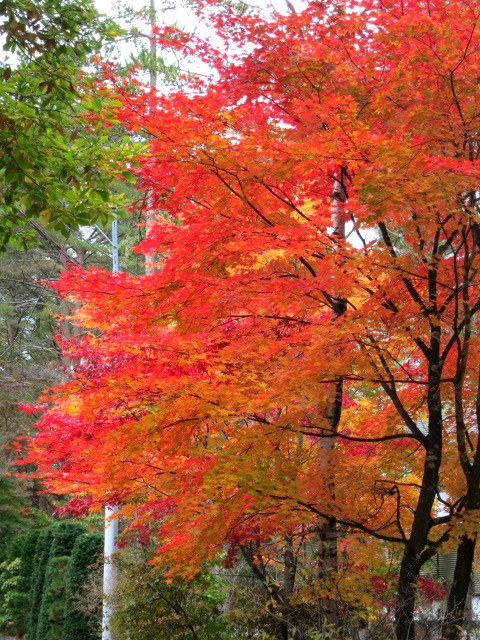 秋の深まる北軽でランチ★KAFE_f0236260_02590451.jpg