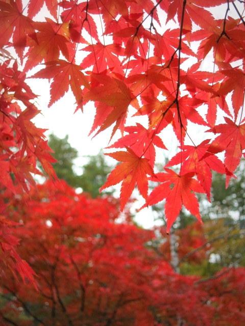 秋の深まる北軽でランチ★KAFE_f0236260_03030194.jpg