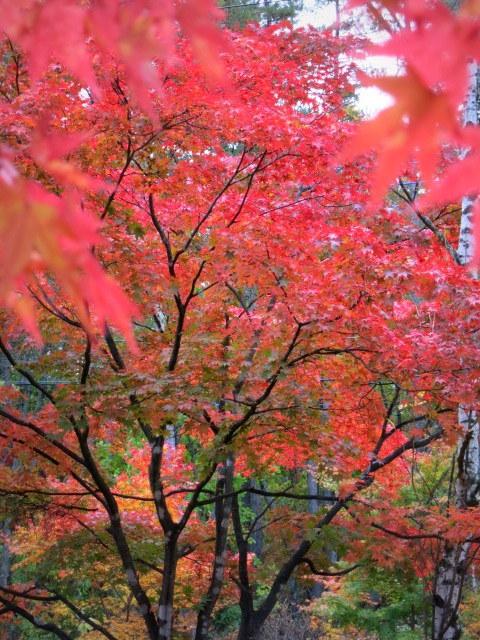 秋の深まる北軽でランチ★KAFE_f0236260_03040426.jpg