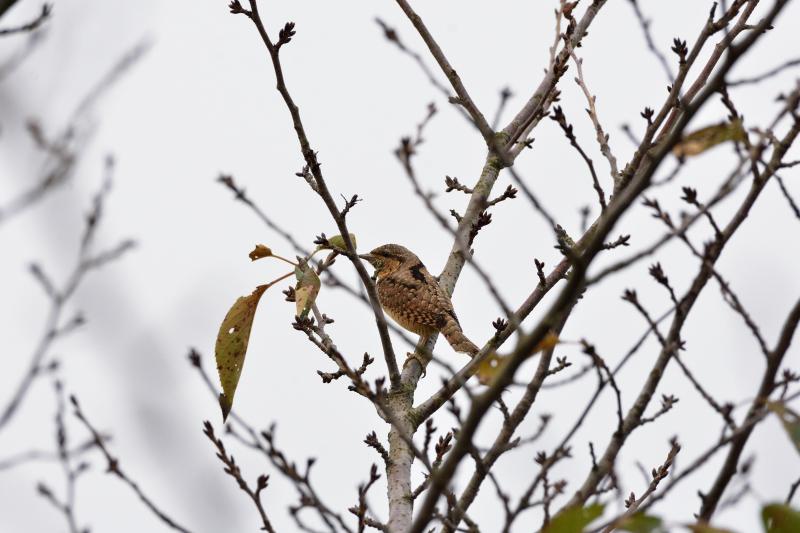 冬鳥_f0202686_19170541.jpg