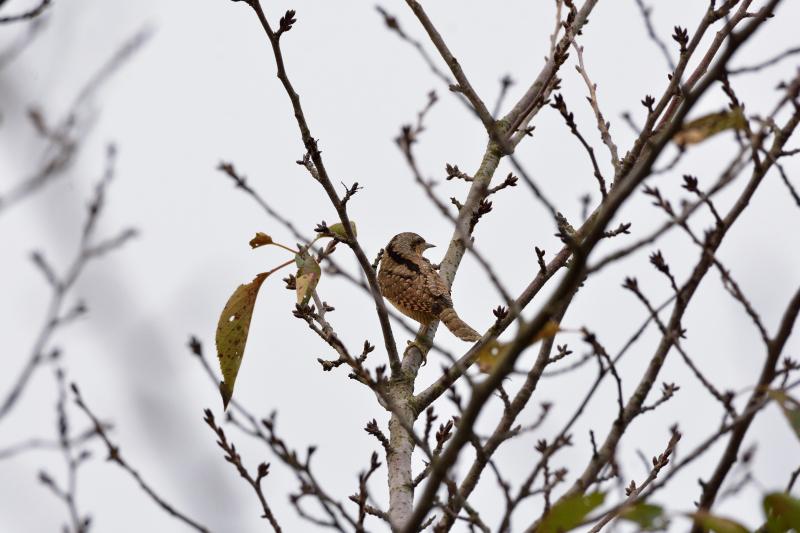 冬鳥_f0202686_19171242.jpg