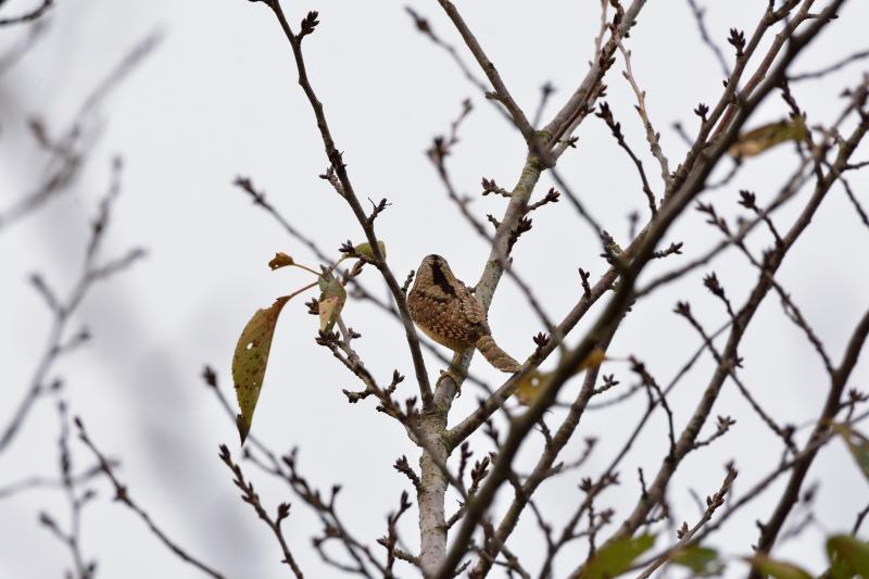 冬鳥_f0202686_19171878.jpg
