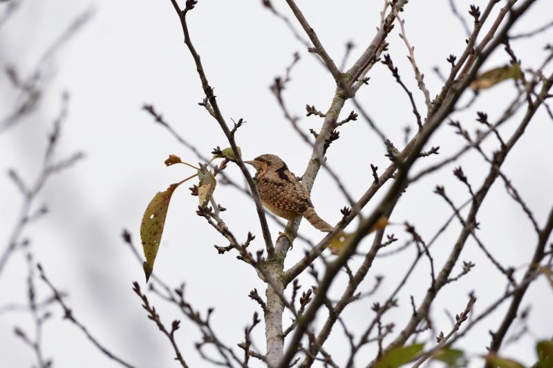 冬鳥_f0202686_19172579.jpg