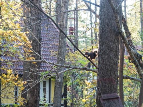 """カフェの窓からみる""""秋""""・・エゾリス君のいる風景。_f0276498_23292476.jpg"""