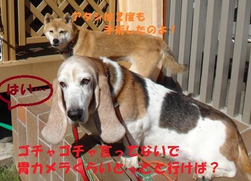 f0121712_07400364.jpg