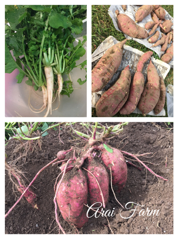 Arai Farm 秋の収穫_d0049817_22425554.jpg