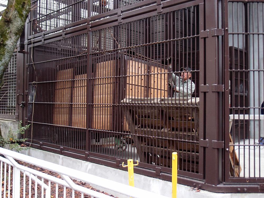 2016.10.25 宇都宮動物園☆トラのアズサさん来園!【Tiger】_f0250322_20383537.jpg