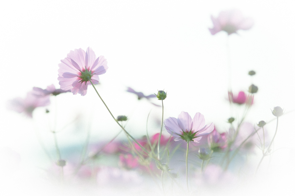 Season   ・・・秋の花たち・・・_f0333031_20152915.jpg