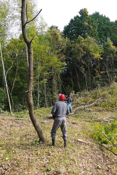 原木しいたけ 平成28年度も11月上旬からの出荷にむけて現在の栽培地の様子と2年間の栽培記録(前編)_a0254656_18184983.jpg